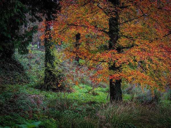 Photograph - Clondegad Woods In Autumn by James Truett
