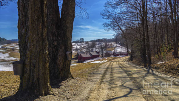 Photograph - Collecting Sap At The Jenne Farm by Scenic Vermont Photography