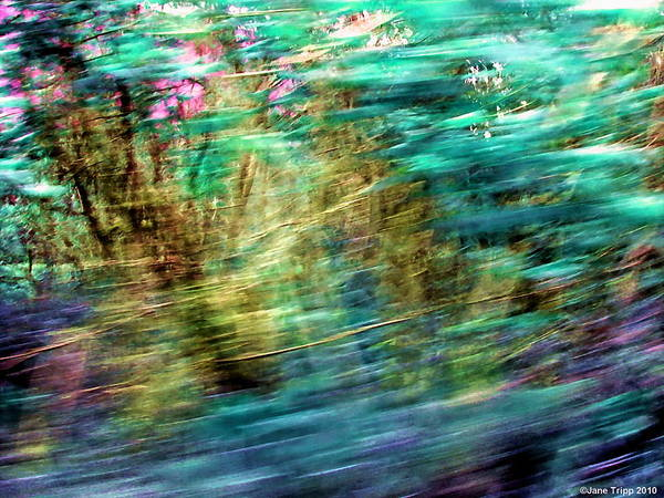 Wall Art - Photograph - Close To The Ground by Jane Tripp