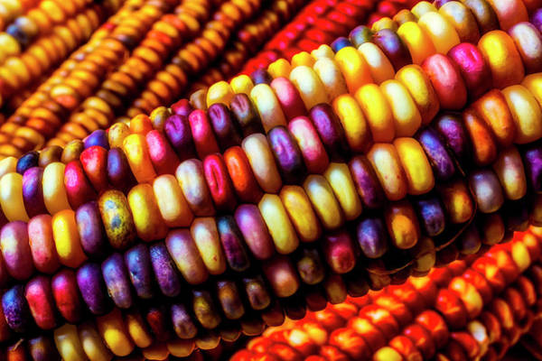 Indian Corn Photograph - Close Up Indian Corn by Garry Gay