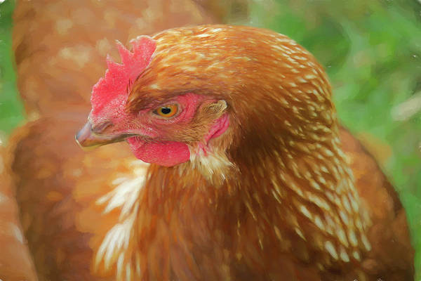 Digital Art - Close-up Of Brown Chicken by Rusty R Smith