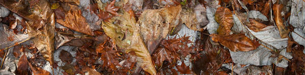 Wall Art - Photograph - Close-up Of Dead Leaves by Panoramic Images