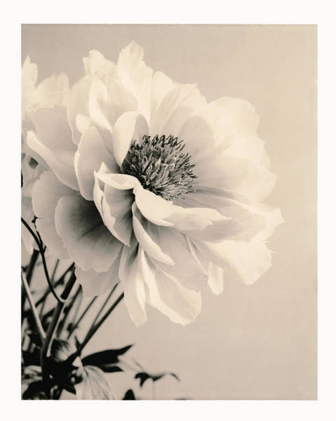 Wall Art - Photograph - Close-up Of Flower With Filter by Gillham Studios