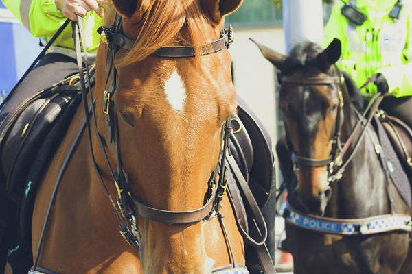 Photograph - Close Up Of Police Horse by Jacek Wojnarowski
