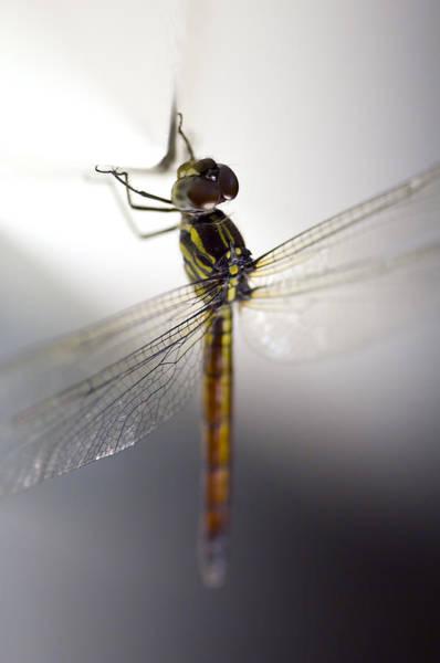 Close Up Shoot Of A Anisoptera Dragonfly Art Print
