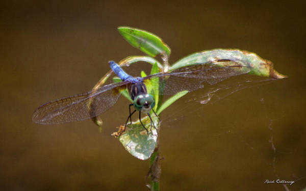 Photograph - Closeup Callaway Gardens Dragonfly Art by Reid Callaway