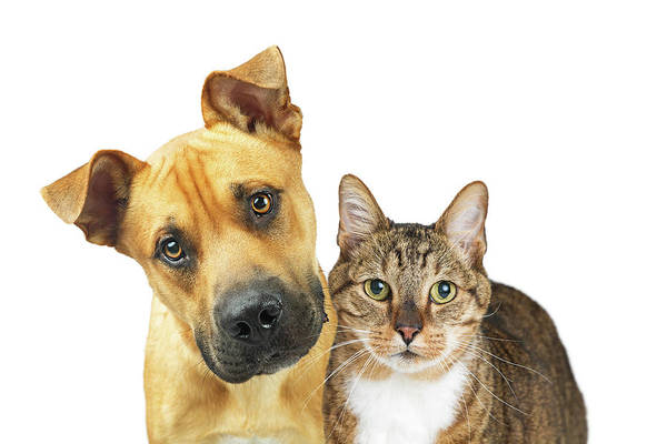 Wall Art - Photograph - Closeup Dog And Cat Looking At Camera by Susan Schmitz
