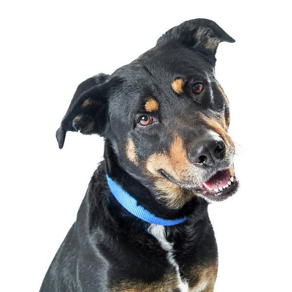 Big Dog Photograph - Closeup Happy Big Dog Crossbreed by Susan Schmitz