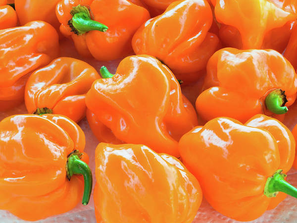 Photograph - Closeup Of Fresh Chillies Habanero Orange by Giovanni Bertagna