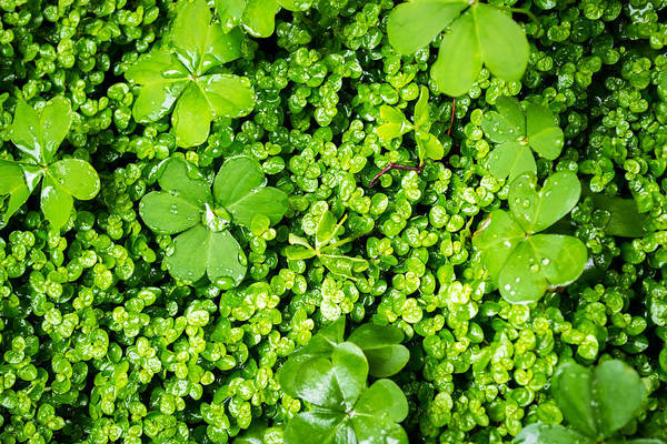 Photograph - Lush Green Soothing Organic Sense by John Williams