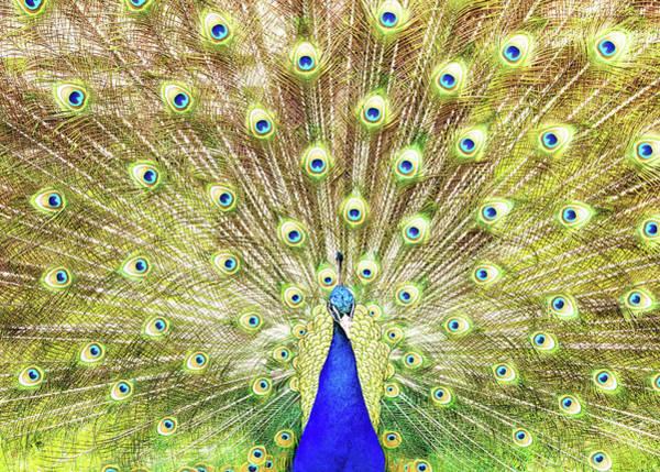 Wall Art - Photograph - Closeup Of Peacock Displaying Train by Susan Schmitz