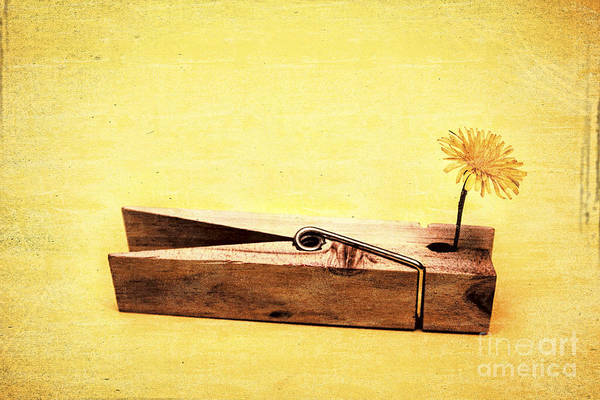 Romantic Flower Photograph - Clothespins And Dandelions by Jorgo Photography - Wall Art Gallery