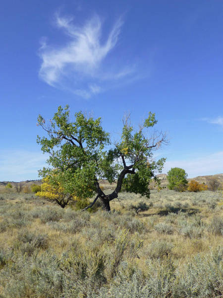 Photograph - Cloud And Cottonwood by Cris Fulton