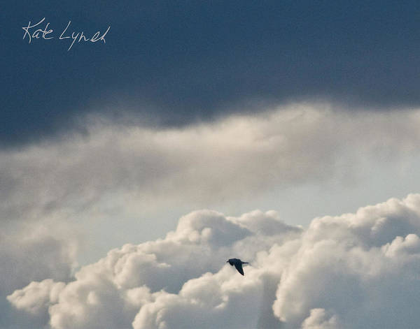 Photograph - Cloud Flyer by Kate Lynch