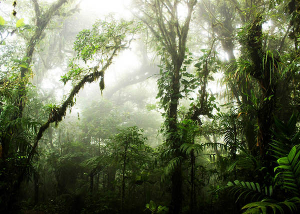 Rain Forest Photograph - Cloud Forest by Nicklas Gustafsson