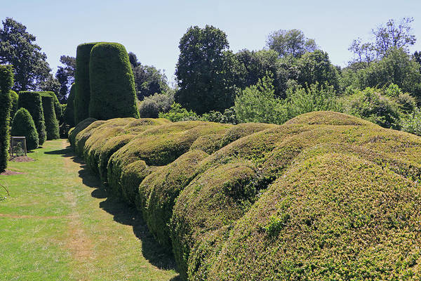 Photograph - Cloud Pruned Hedge by Tony Murtagh