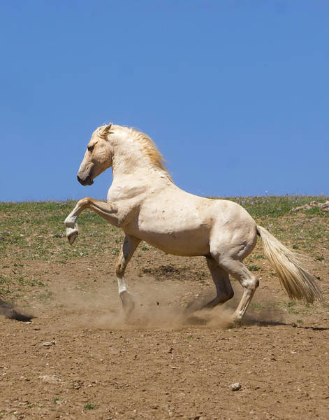 Photograph - Cloud The Magnificent Stallion by Mark Miller