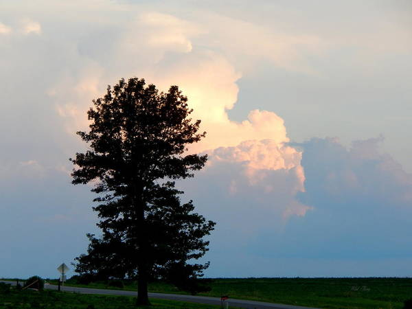 Photograph - Cloud Watching by Wild Thing