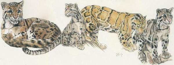 Mixed Media - Clouded Leopard by Barbara Keith