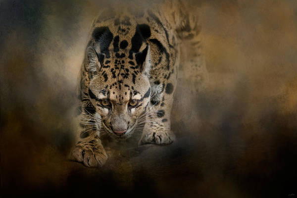 Photograph - Clouded Leopard On The Hunt by Jai Johnson