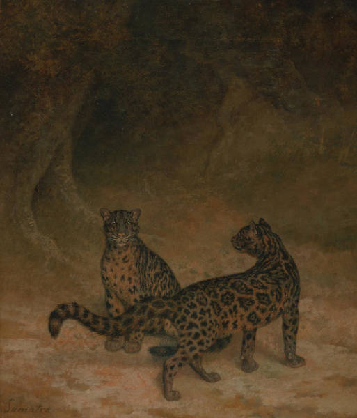 Painting - Clouded Leopards by Jacques-Laurent Agasse