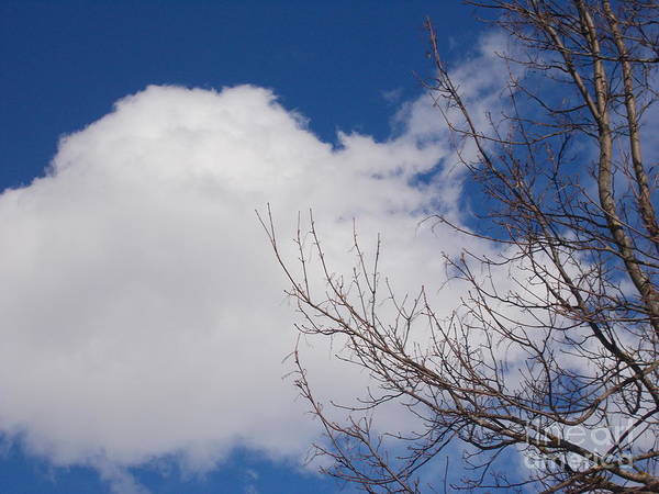 Wall Art - Photograph - Clouds 14 by Angelika Heidemann