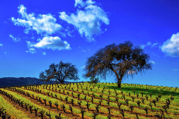 Wall Art - Photograph - Clouds Above Vinyards by Garry Gay