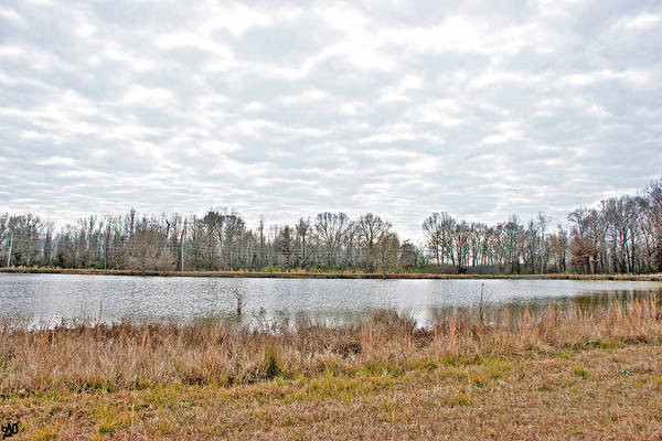 Photograph - Clouds Over Pond by Gina O'Brien