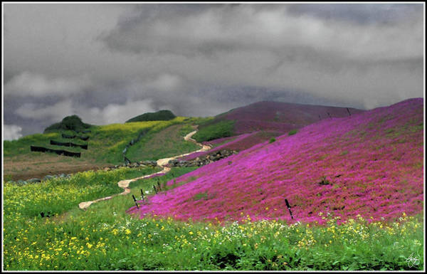 Photograph - Clouds Over Purple Flower Fields by Wayne King