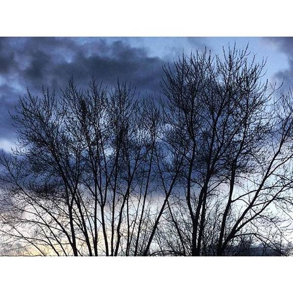 Wall Art - Photograph - Clouds Through Trees by Frank J Casella