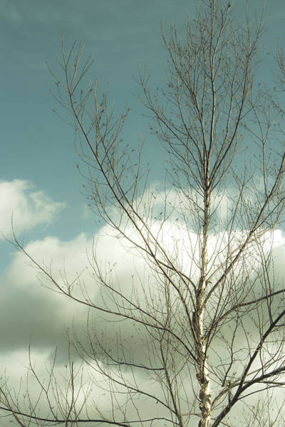 Wall Art - Photograph - Cloudy Blue Sky Through Tree Top No 2 by Ben and Raisa Gertsberg