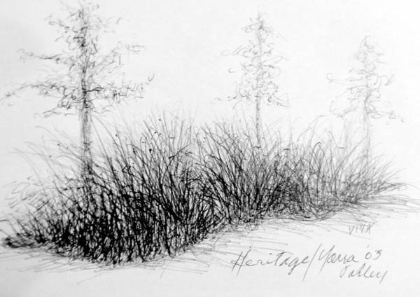 Drawing - Cloudy Day - Yarra  Valley  Grasses by VIVA Anderson