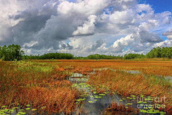 Photograph - Cloudy Sky Over Marsh by Tom Claud