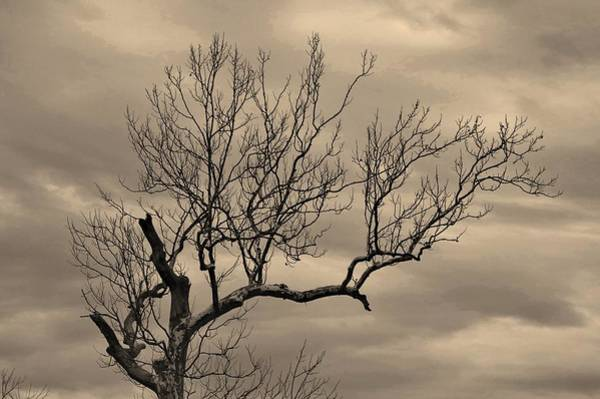 Photograph - Cloudy Sky Tree by Buddy Scott