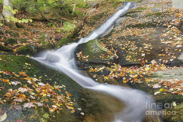 Photograph - Clough Mine Brook - Kinsman Notch New Hampshire by Erin Paul Donovan