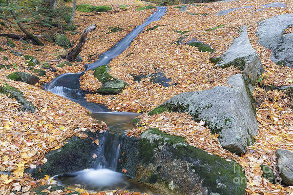 Photograph - Clough Mine Brook - Woodstcok New Hampshire by Erin Paul Donovan