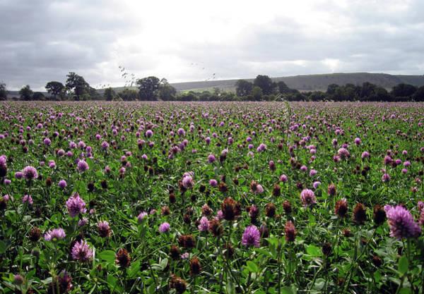 Photograph - Clover Field Wiltshire England by Kurt Van Wagner