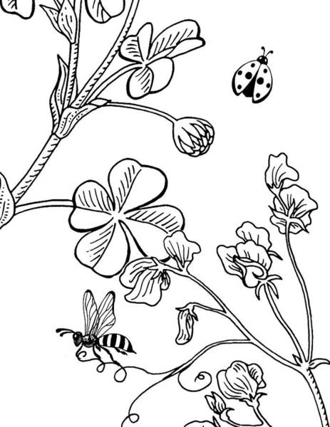 Sweet Drawing - Clover Sweet Pea Ladybug And Bee Drawing by Irina Sztukowski