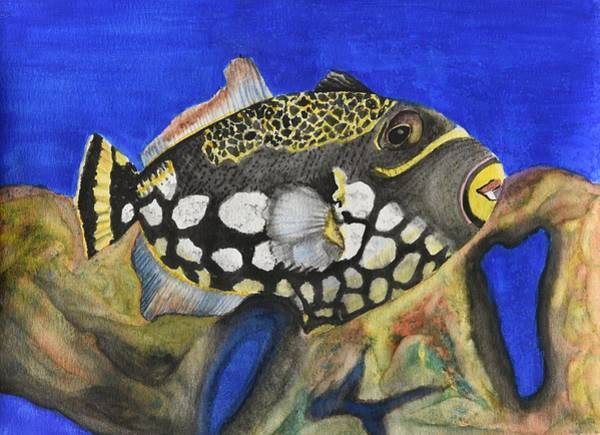 Clownfish Painting - Clown Triggerfish by Linda Brody
