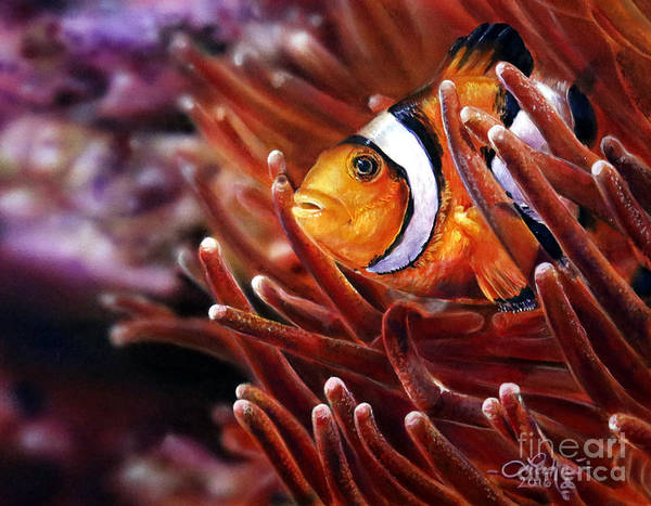 Clownfish Painting - Clownfish by Lachri