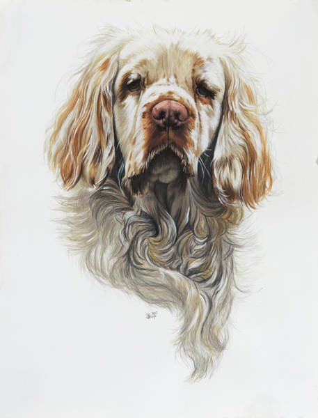 Painting - Clumber Spaniel In Watercolor by Barbara Keith