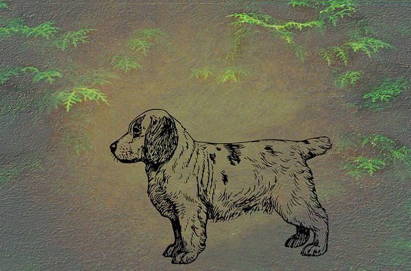 Mixed Media - Clumber Spaniel by Movie Poster Prints