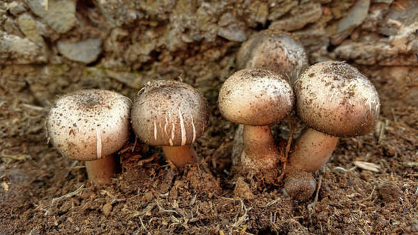Photograph - Cluster Of Mushrooms by Pamela Walton
