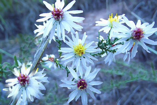 Digital Art - Cluster Of White Asters by Shelli Fitzpatrick
