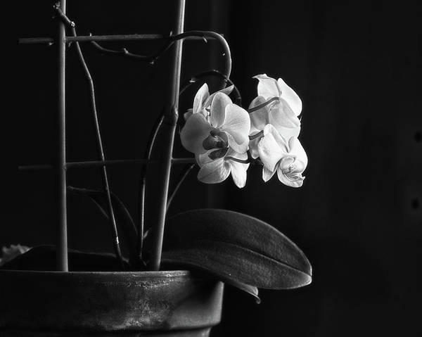 Wall Art - Photograph - Clustered In A Corner by Susan Capuano