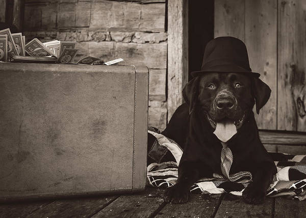Photograph - Clyde by Heather Applegate
