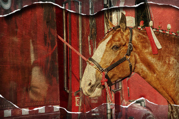 Photograph - Clydesdale Ripped by Alice Gipson