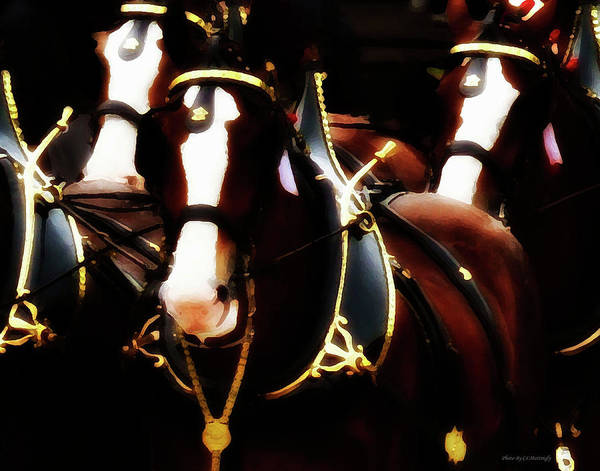 Photograph - Clydesdales by Coleman Mattingly