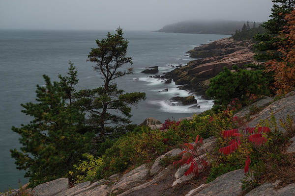 Photograph - Coast Of Acadia by Gary Lengyel
