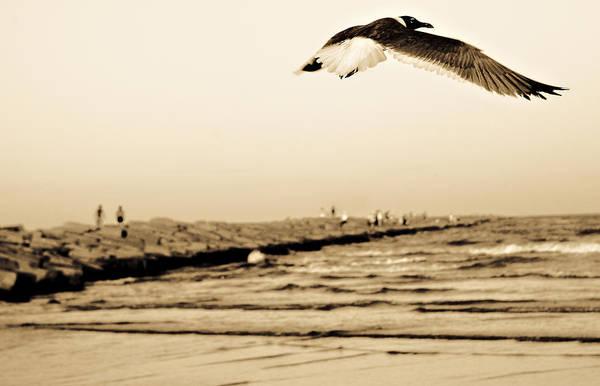 Photograph - Coastal Bird In Flight by Marilyn Hunt